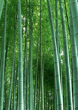 Bamboo 101