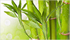 benefits of bamboo