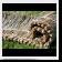 Tahitian Palm Thatch 3ft x 2ft